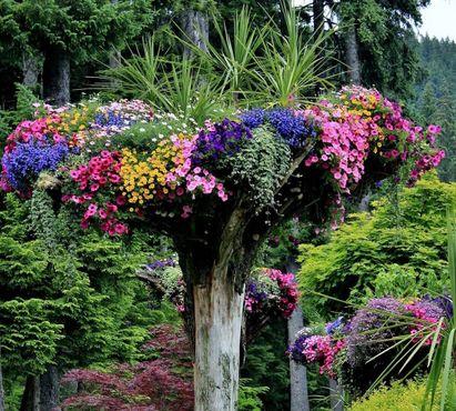 Перевёрнутые деревья в ботаническом саду Глэсиер-Гарденс