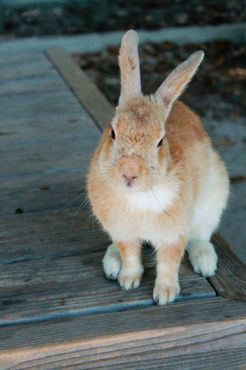 Ручные кролики