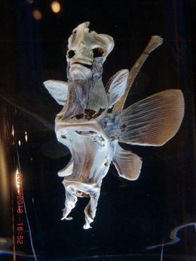 Кость рыбы-демона