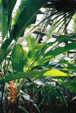 Только в оранжерее произрастает 4 500 видов живых растений