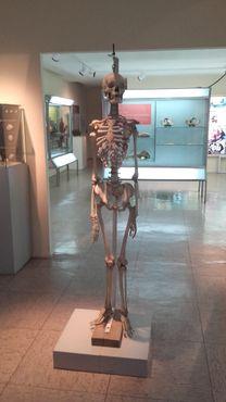 Женский скелет