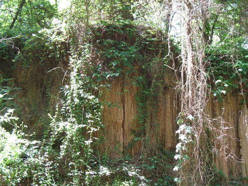Обрыв в Окаменелом лесу