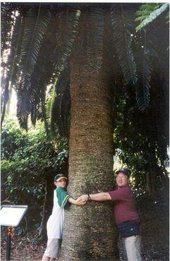 Тот самый ствол дерева в Дурбанском ботаническом саду