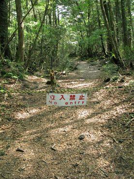 Аокигахара, лес самоубийц
