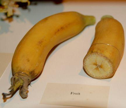 Стеклянный банан. Фото, сделанное Curious Expeditions