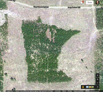 Лес «Миннесота»
