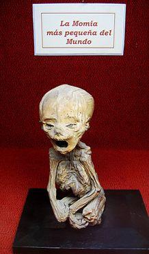 Самая маленькая мумия в мире