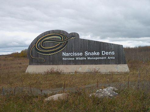 Змеиные логова Нарцисса