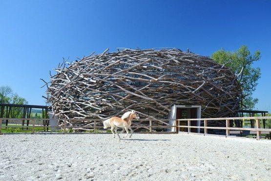 Ферма «Гнездо аиста»действительно служит манежем для верховой езды