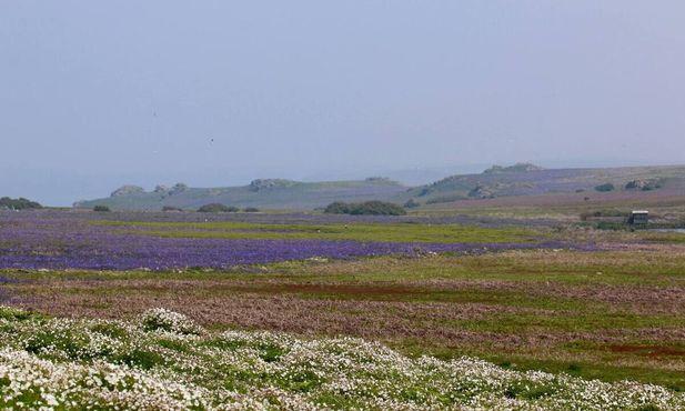 Густое поле колокольчиков, простирающееся до горизонта