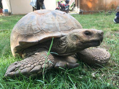 Черепаха вЛекки Консервейшен Сентр