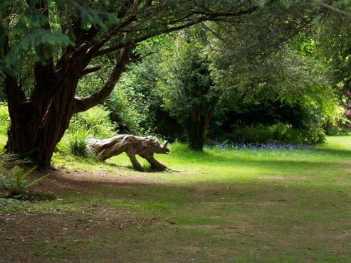 Искривленное дерево в виде носорога - любимое место детей в ботаническом саду Килмакурраг