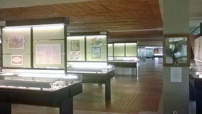 В Геологическом музее