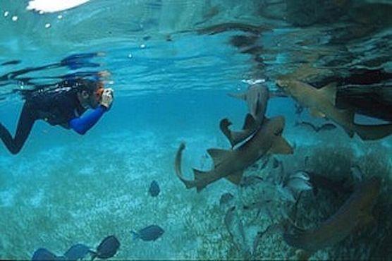 Аллея акул и скатов