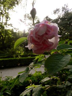 Мудрый король знает, что все любят сады с розами