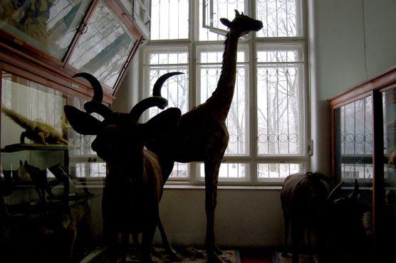 Жираф и другие экспонаты в тени