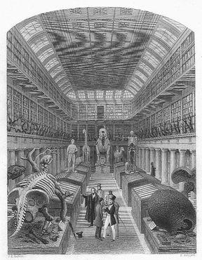 Хантерианский музей в 1853 году, гравюра Шеперда и Редклиффа