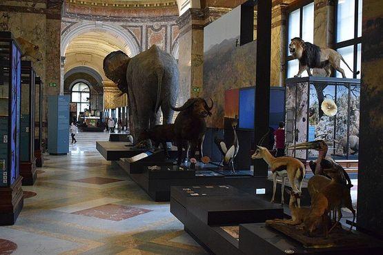 Вид на один из залов Музея естественной истории