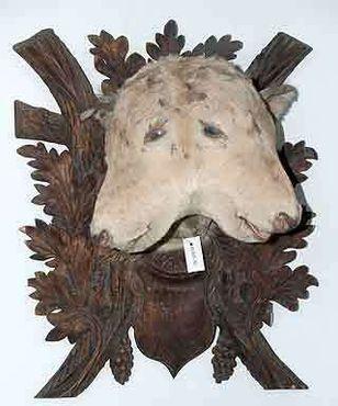 Двухголовый теленок в зоологической части музея