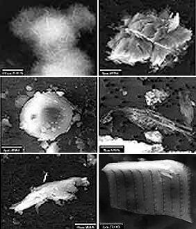 Микробы озера Восток