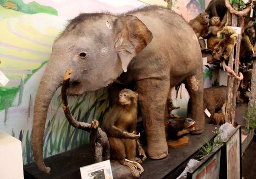 Слонёнок в окружении обезьянок
