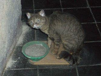 Потрёпанное чучело кошки
