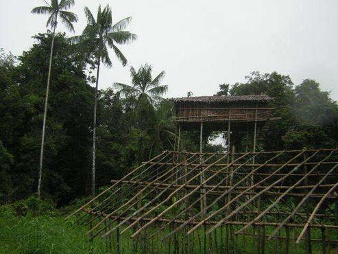 Дома на деревьях, построенные людьми короваи в Папуа, индонезийской части острова Новая Гвинея