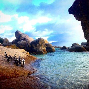 Святилище пингвинов на пляже Болдерс