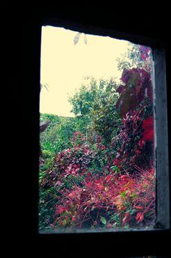 Цвета осени, видные сквозь окно
