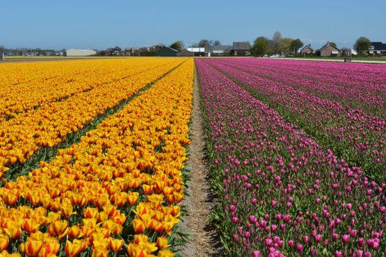 Жёлтые и фиолетовые цветы