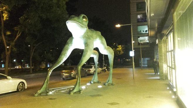 Лягушка в ночное время