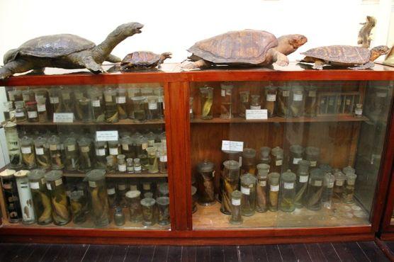 Черепахи и рыбы