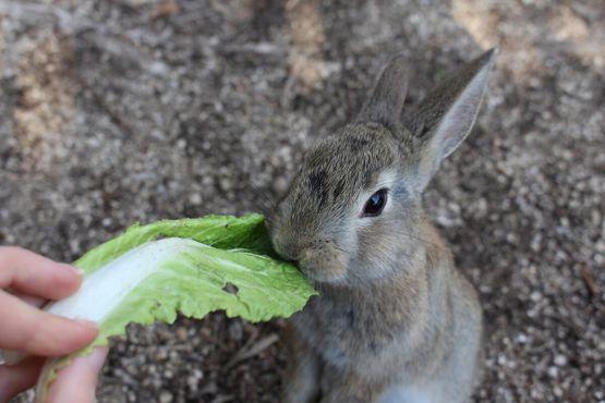.Ручной кролик