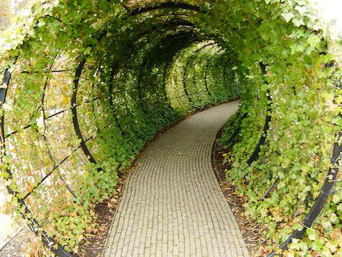 Туннель в сад