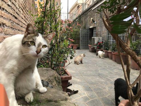 В приюте много кошек