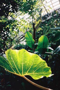 Среди разнообразных растений в оранжерее содержатся тропические, пустынные и подводные растения